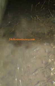 யாழில் மீன் மழை