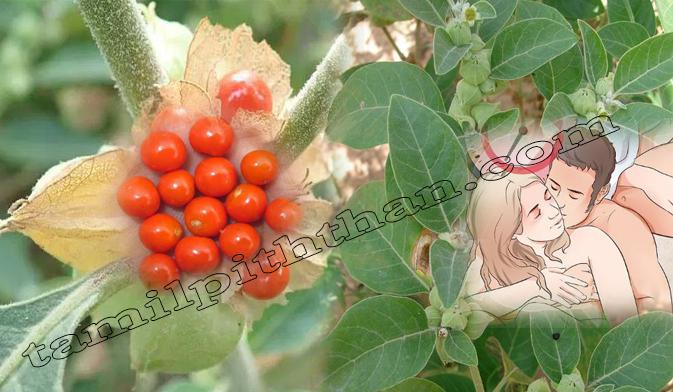 Ashwagandha Benefits in Tamil